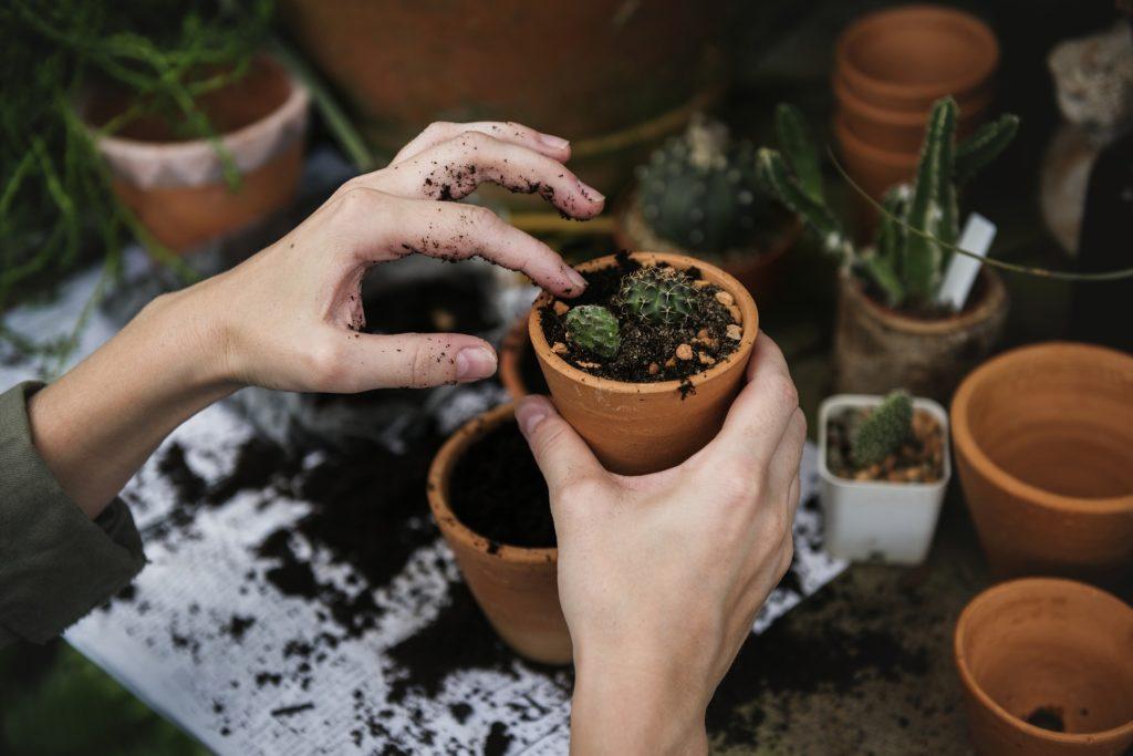 jardinage, écologie, environnement, activité, teambuilding, ecoresponsable