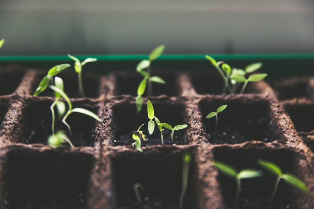 atelier jardinage en séminaire
