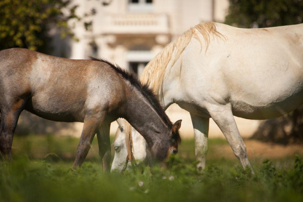 séminaire avec chevaux