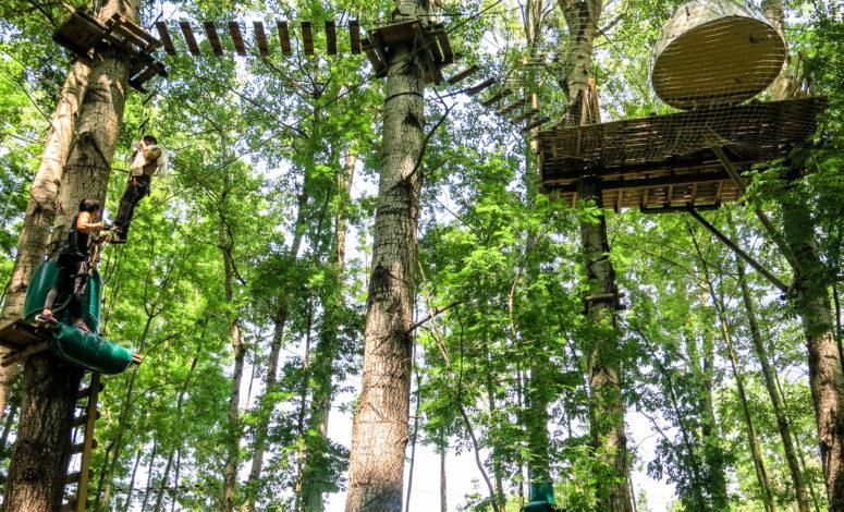 Hébergement dans les arbres Rock and Bleau