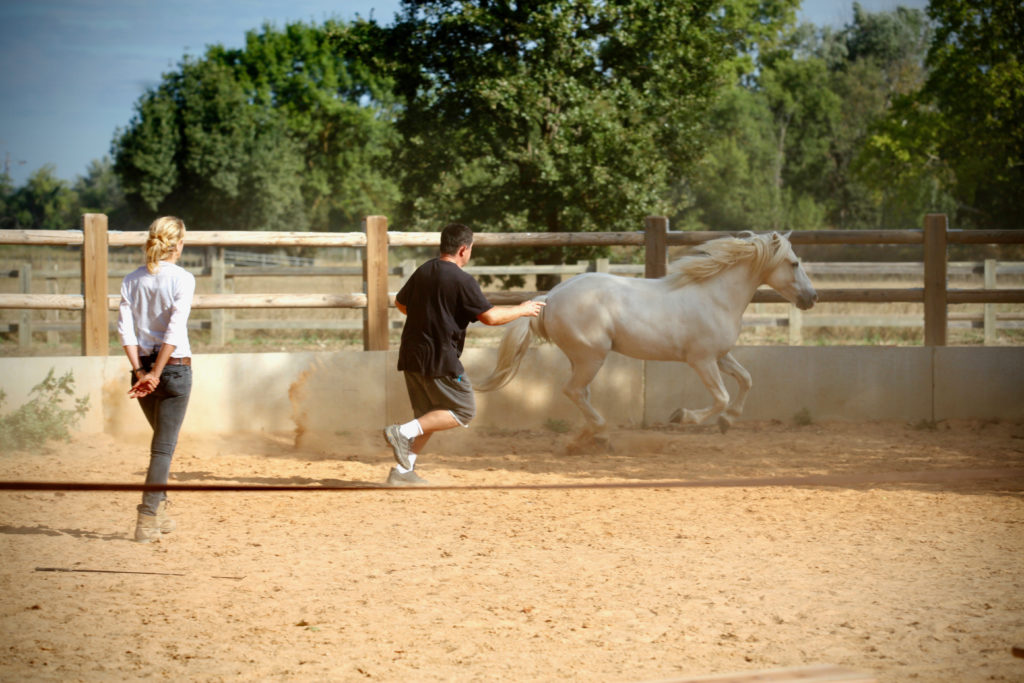 team building chevaux